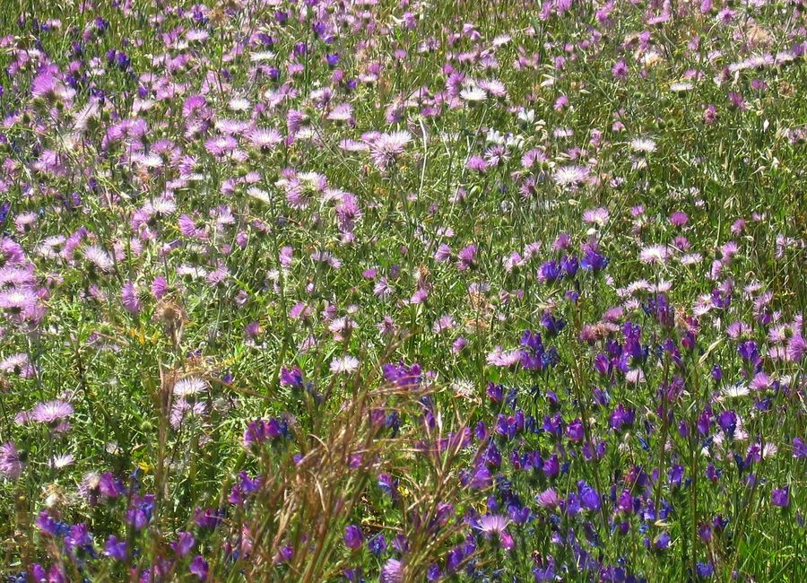 Frühling im Benchijigua-Tal