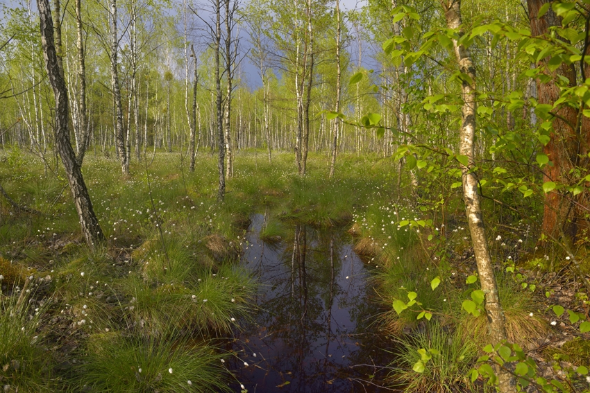 Frühling im Biebrza Nationalpark, Moorlandschaft