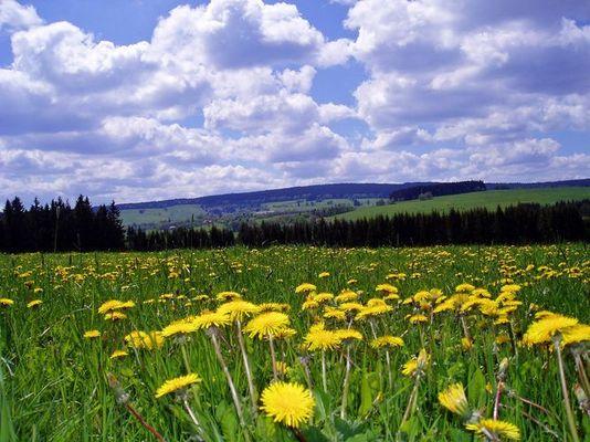 Frühling im Böhmerwald