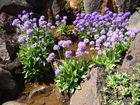 Frühling im Botanischen Garten 5