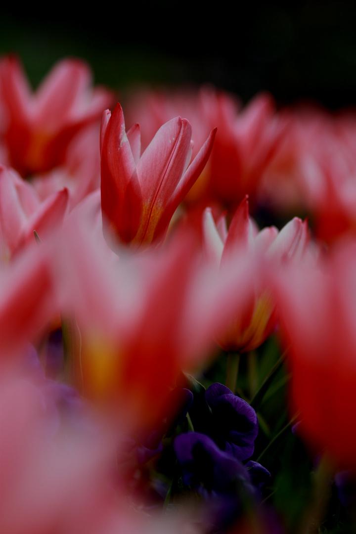 Frühling im Botanischen Garten III