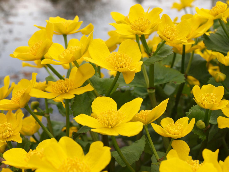 Frühling im Botanischen Garten Mainz