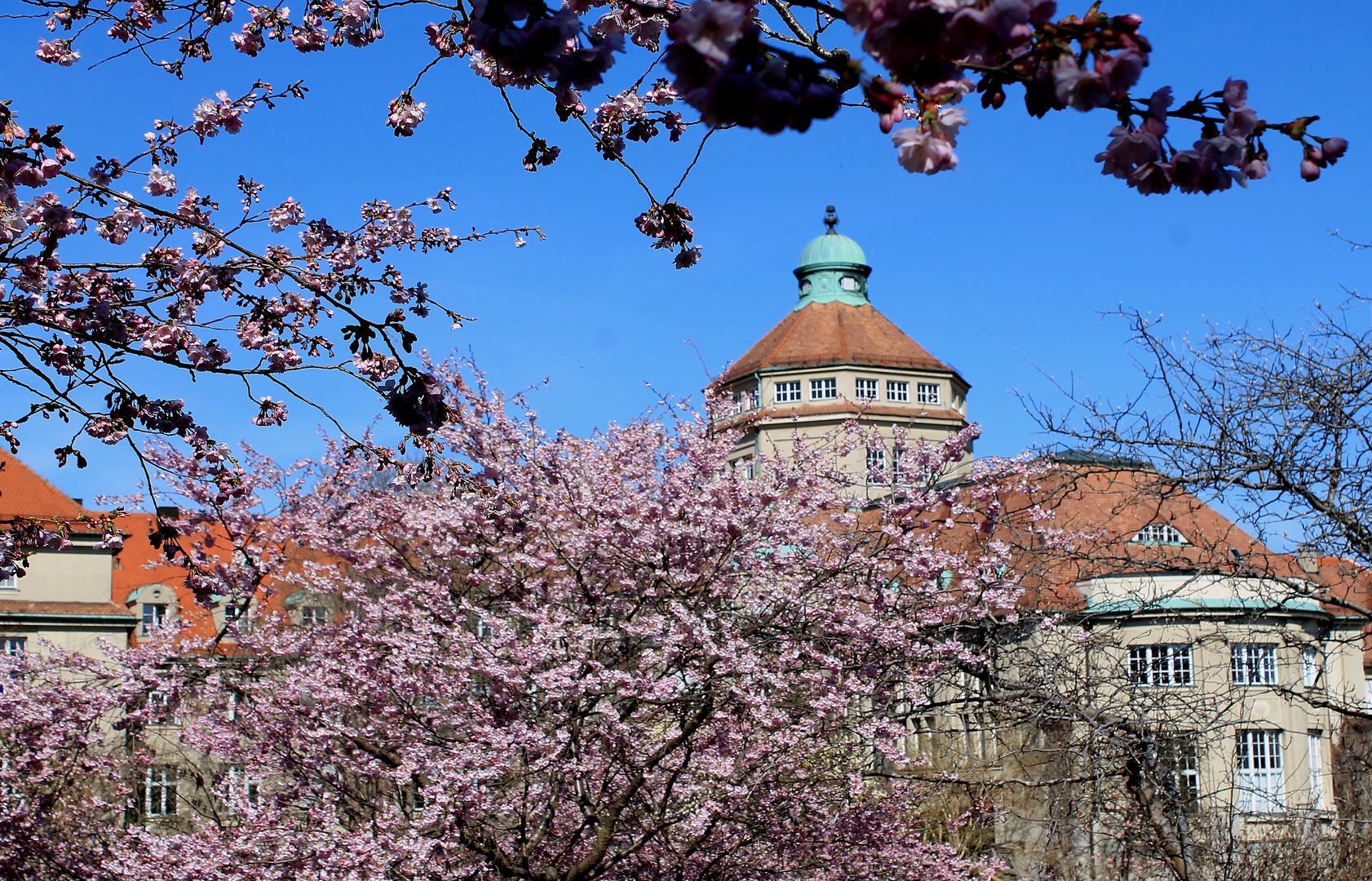 Frühling im Botanischen Garten München