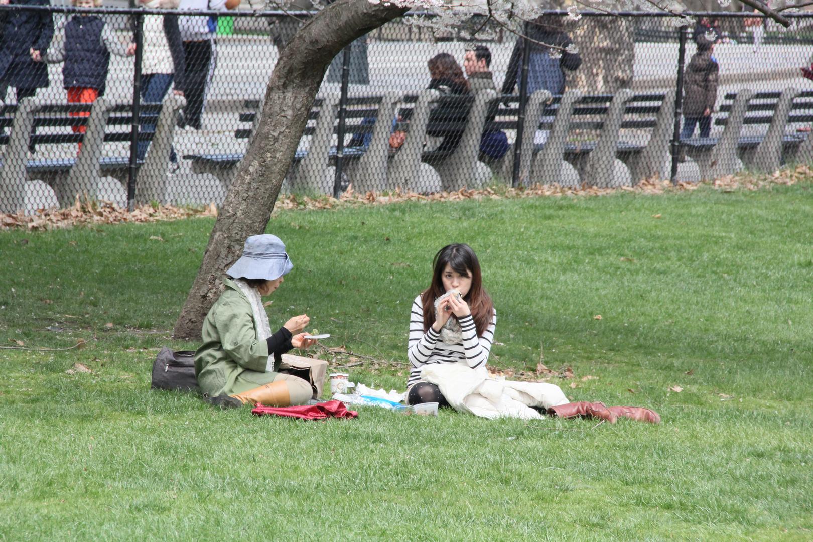 Frühling im Central Park III
