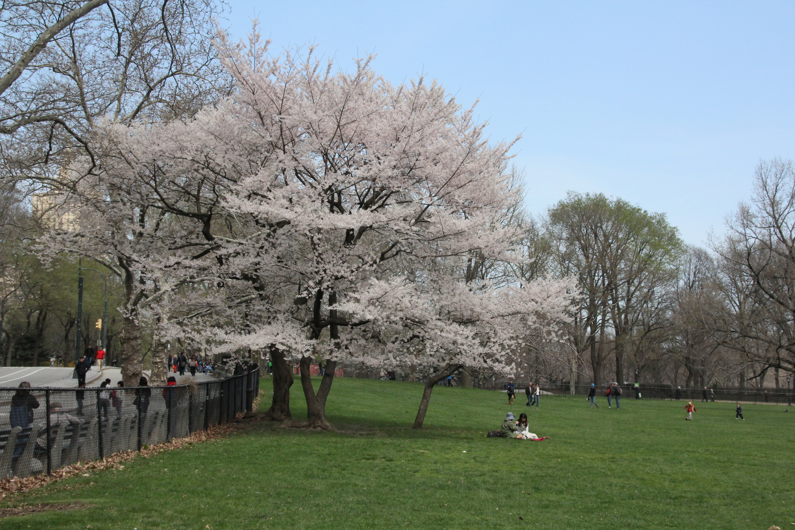 Frühling im Central Park NY