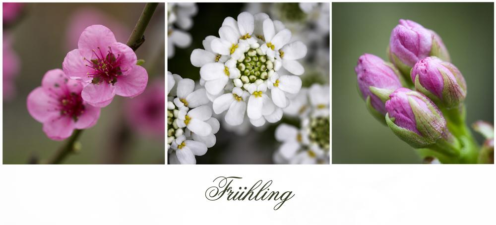 Frühling im eigenen Garten