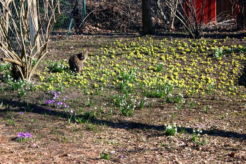 Frühling im Februar 08