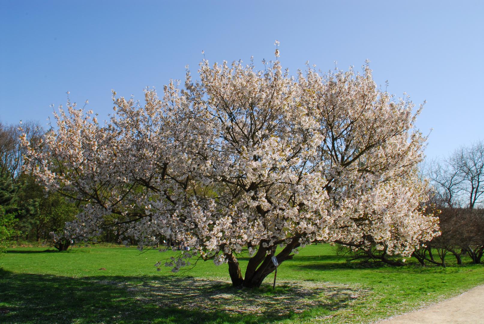 Frühling im Forst Botanischen Garten
