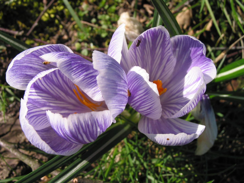 Frühling im Garten 1