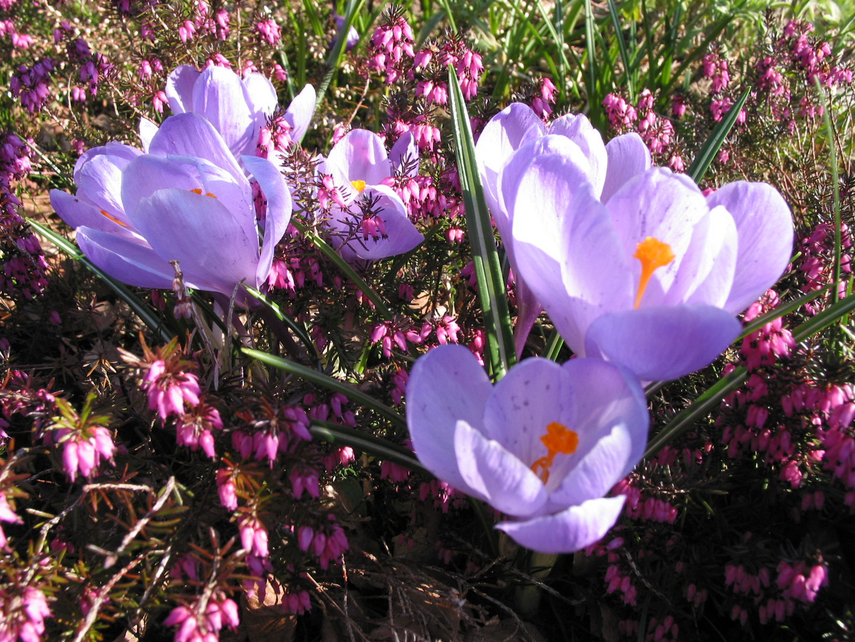Frühling im Garten 2