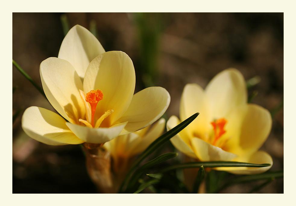 Frühling im Garten #2