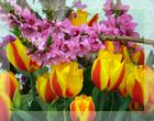 Frühling* im Garten