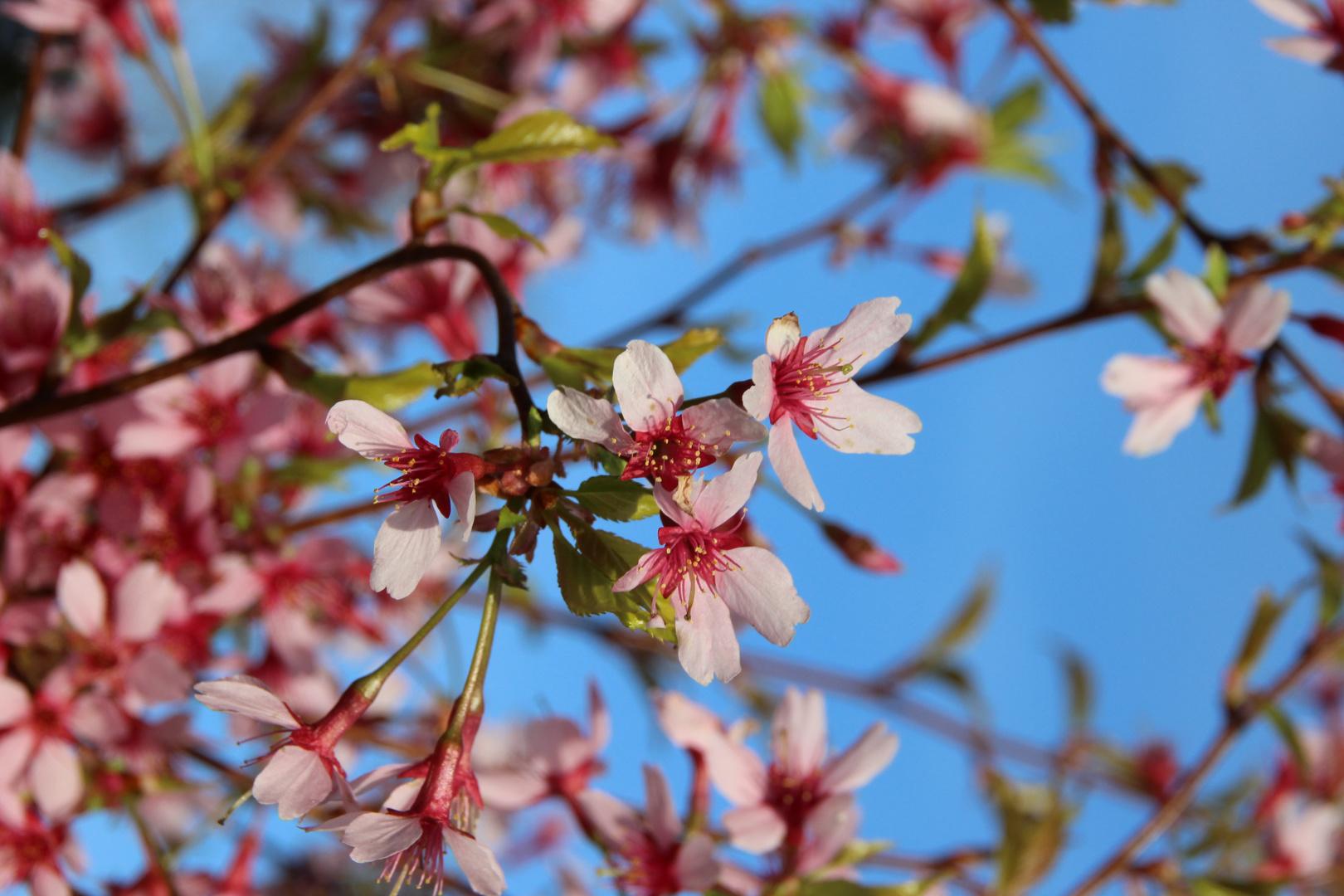 Frühling im Garten!