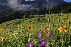 Frühling im Gebirge