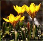 Frühling im Gegenlicht