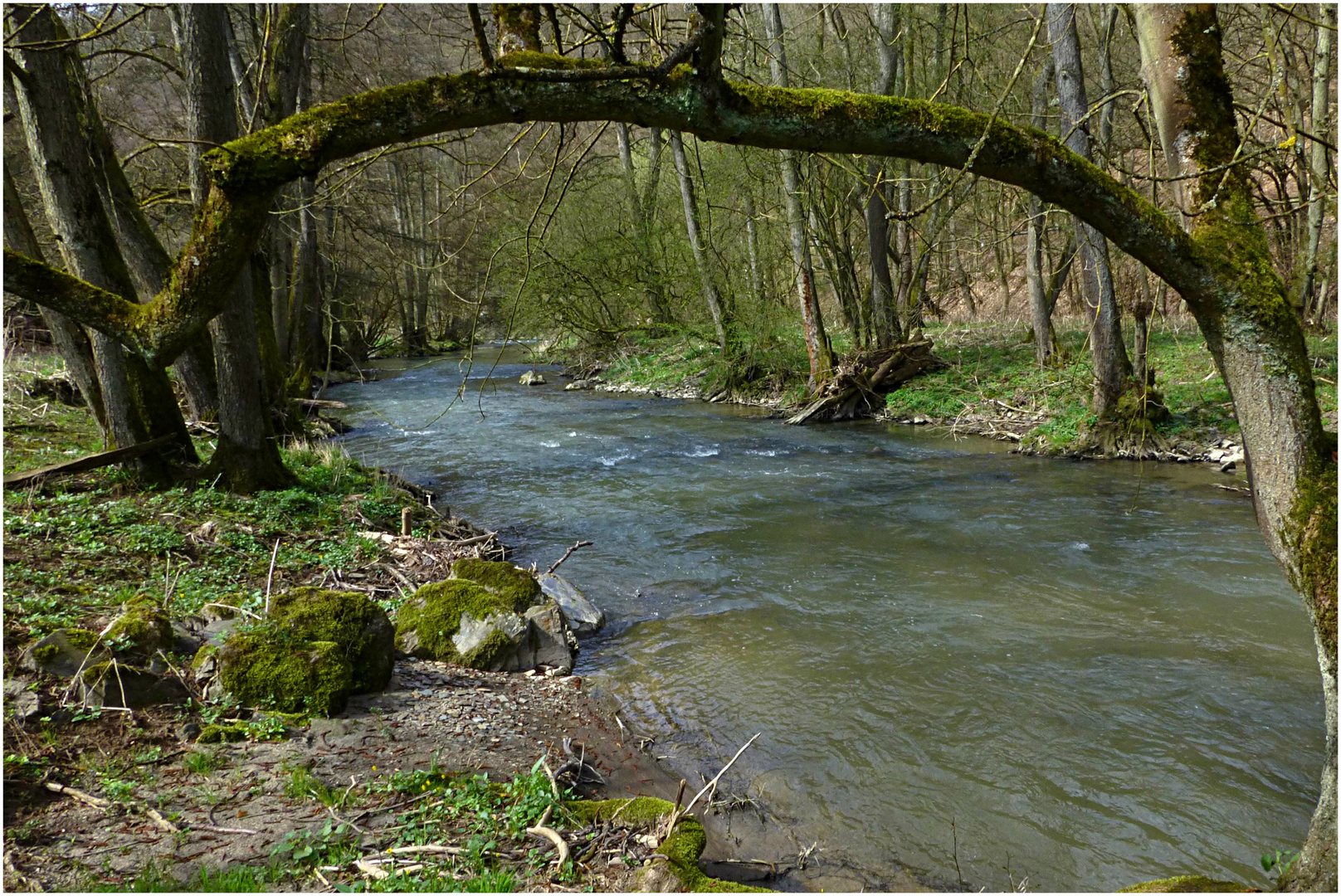 Frühling im Gelbachtal / Westerwald (2)