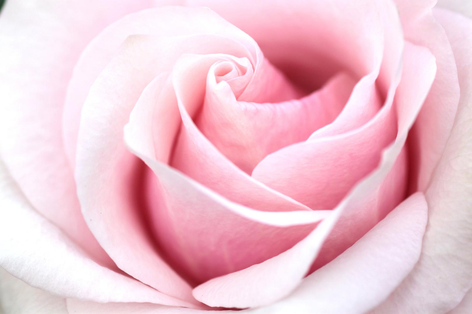 Frühling im Glashaus - rosa