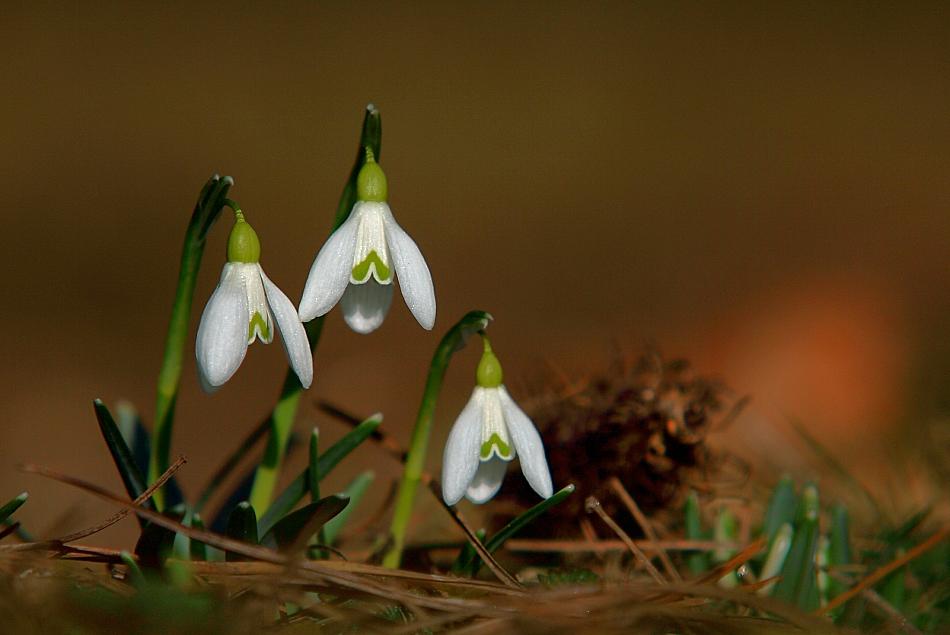 Frühling im Grazer Stadtpark