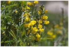 Frühling im Great Basin NP
