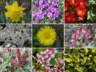 Frühling im Hausgarten