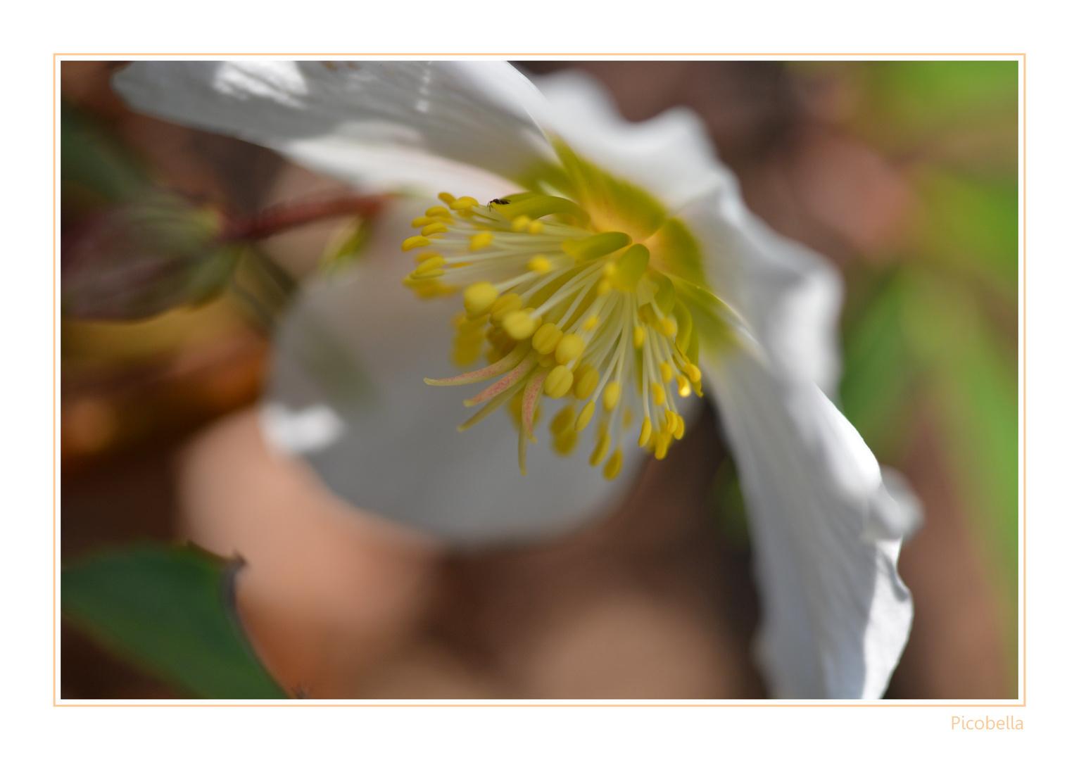 Frühling im heimischen Garten..