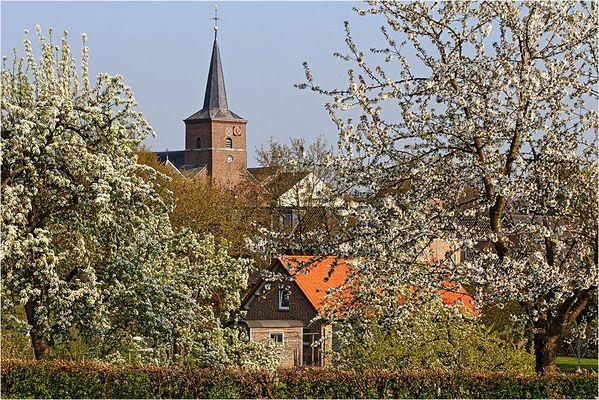 ~ Frühling im Heuvelland ~