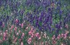 Frühling im Hillcountry, Texas