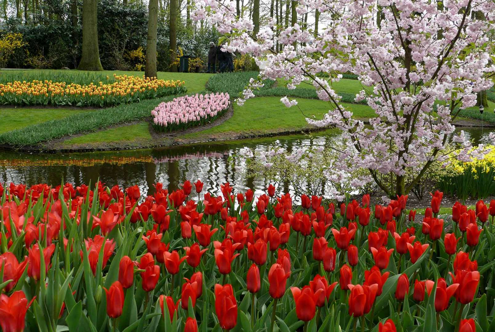 fr hling im keukenhof foto bild jahreszeiten fr hling. Black Bedroom Furniture Sets. Home Design Ideas