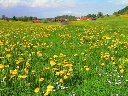 Frühling im Kraichgau