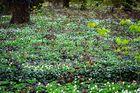 Frühling im Laubwald