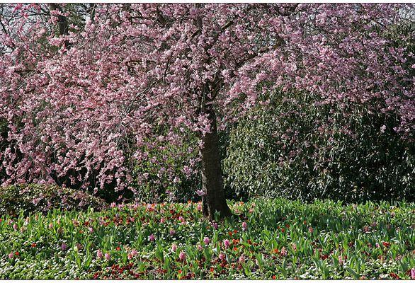 Frühling im Luisenpark I