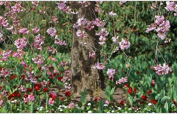 Frühling im Luisenpark II