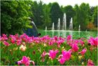 Frühling im Maximillianpark