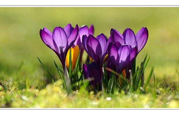 Frühling im Mühlviertel 03