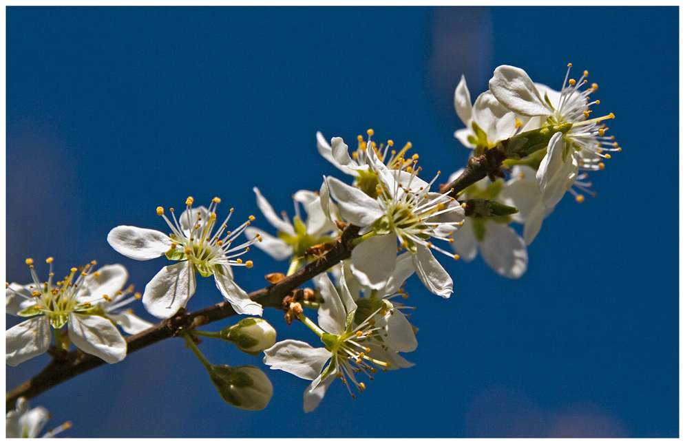 Frühling im Obstgarten.