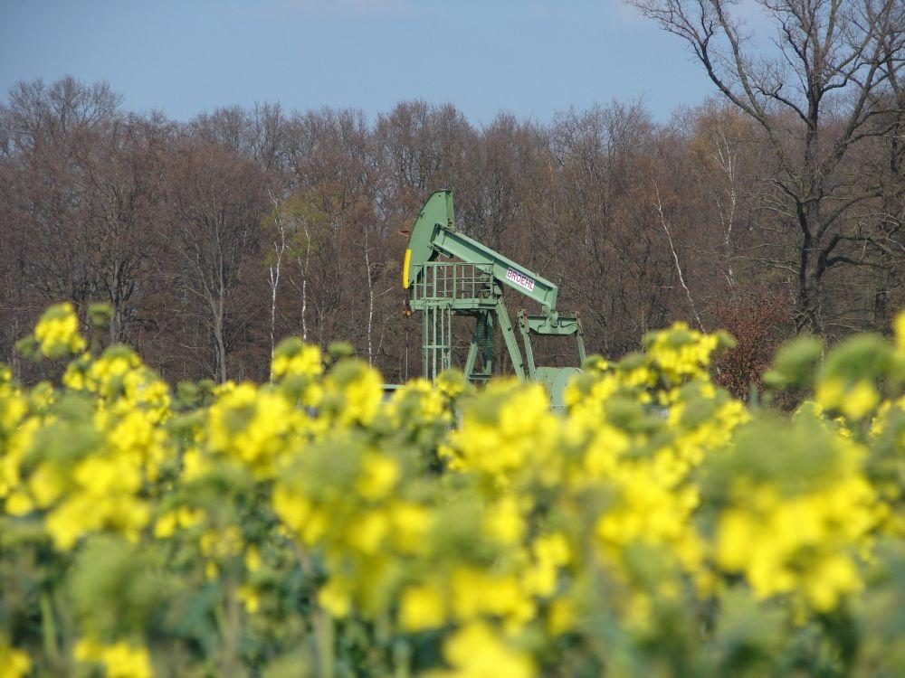 Frühling im Ölfeld