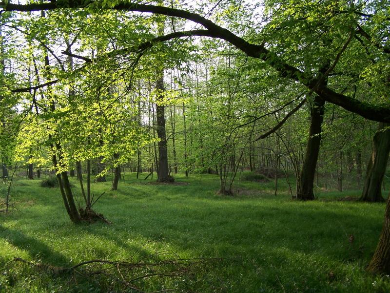Frühling im Ötigheimer Wald
