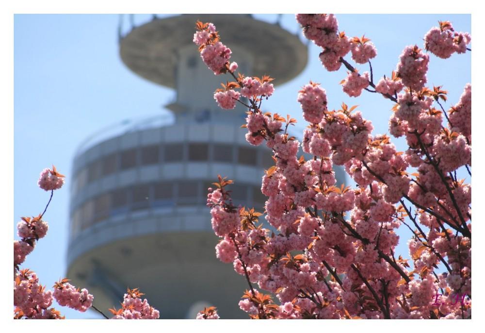 Frühling im Olympiapark