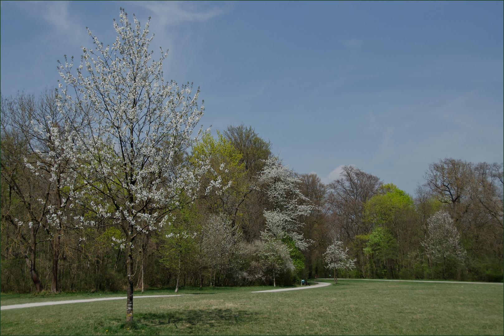 Frühling im Park (2)