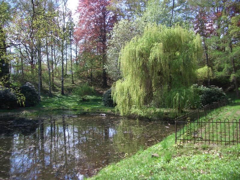 Frühling im Park 2