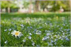 Frühling im Park
