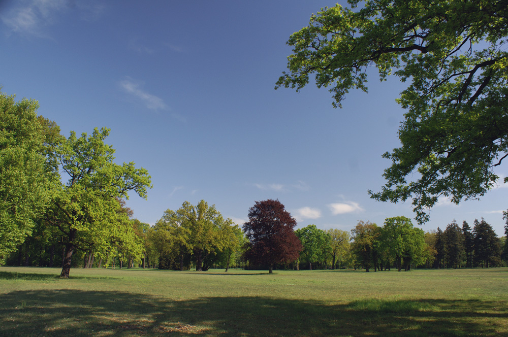 Frühling im Park(3)