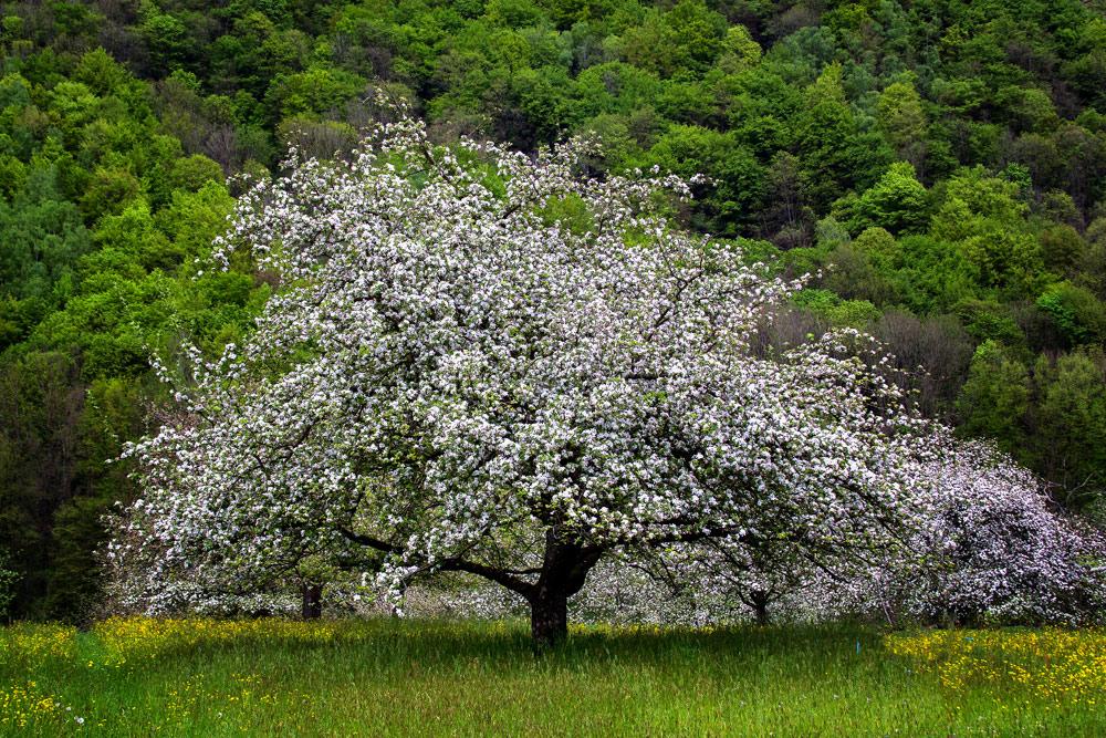 Frühling im Passauer Land