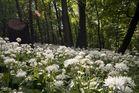 Frühling im Pötzleinsdorfer Schlosspark