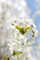 Frühling im Rauental