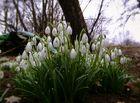 Frühling im Remstal - 2