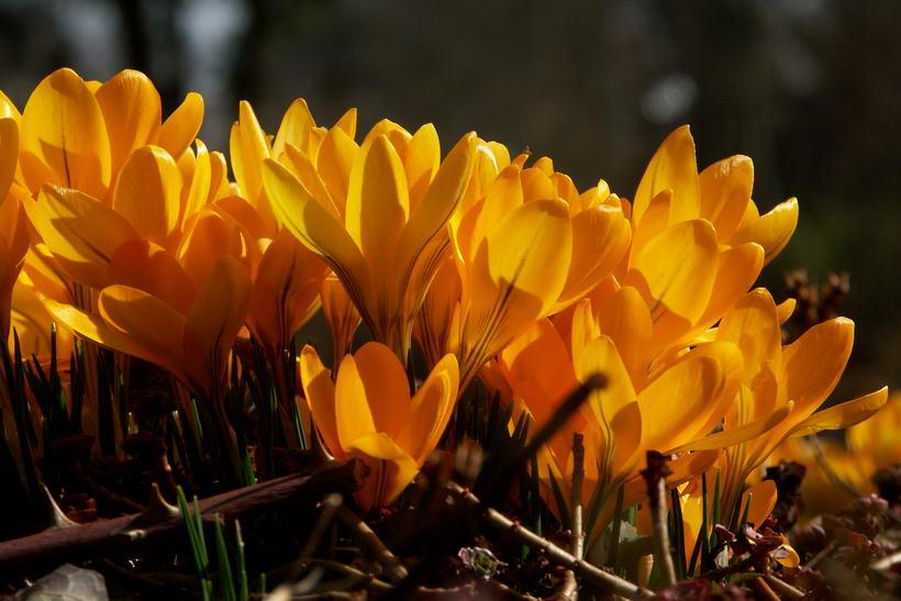 Frühling im Rosengarten Bern