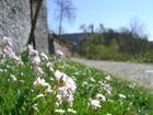 Frühling im Schlosspark
