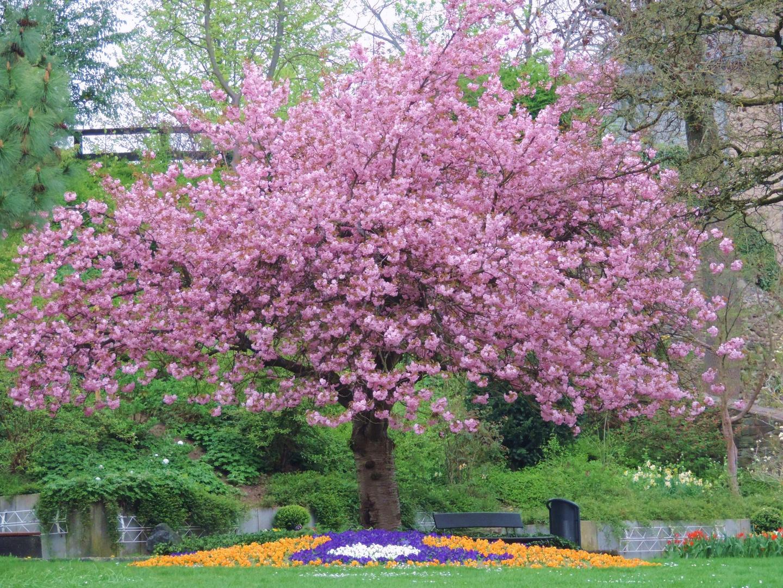 Frühling im Schlosspark in Siegen