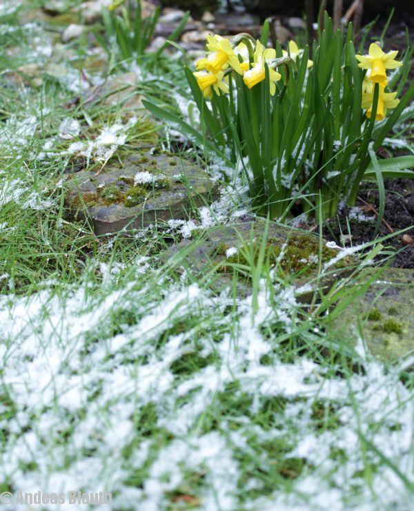 Frühling im Schnee